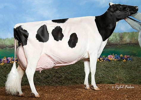 Ernest-Anthony Aphrodite EX-95; Stormatic x Tri-Day Ashlyn
