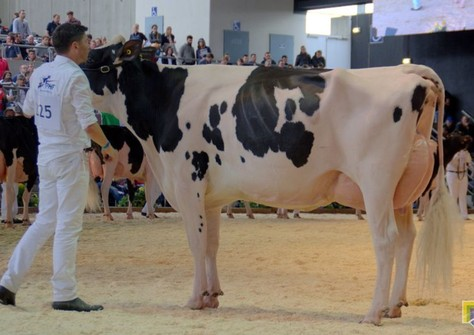 Future Dream H. Darina EX-90