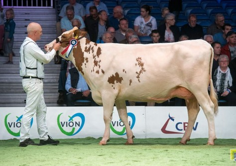 Huntje Holstein Anemoon 147 VG-88