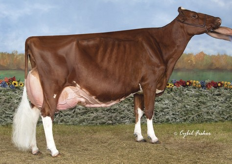 KHW Regiment Apple-Red EX-96