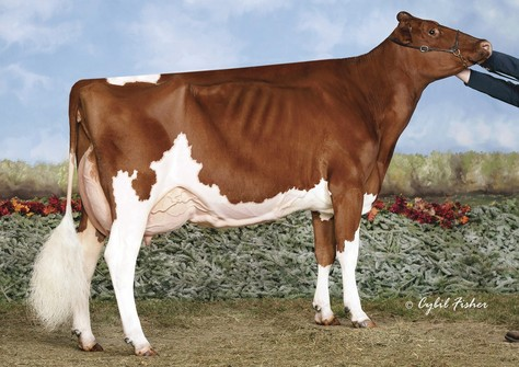 Ms Candy Apple Red EX-94, full sister to Applicious-Red EX-92