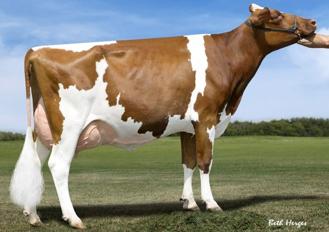 MS Talent Applicious-Red EX-92