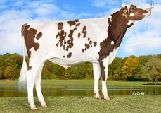 Baymax Red, Bagno x K25 Red VG-88
