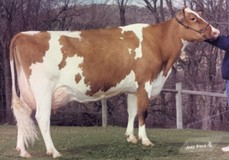 Elites-JSJ Fac Feebe-Red EX-92