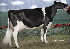 MD-Delight Durham Atlee EX-92