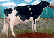 MS Kingstead Chief Adeen EX-94