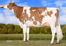Wilder Smile Red VG-85