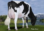 Gen-I-Beq Goldwyn Secret RC