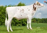 Huntje Holstein Kavage P Red